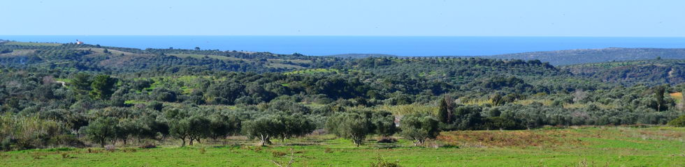 Κ61: 48.000 m², Great value for money, suitable for business use, sea views
